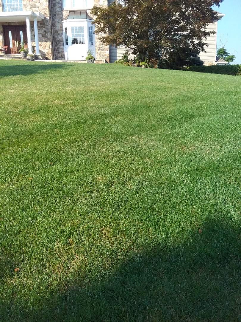 Florham Park, NJ - Lawn care treatment