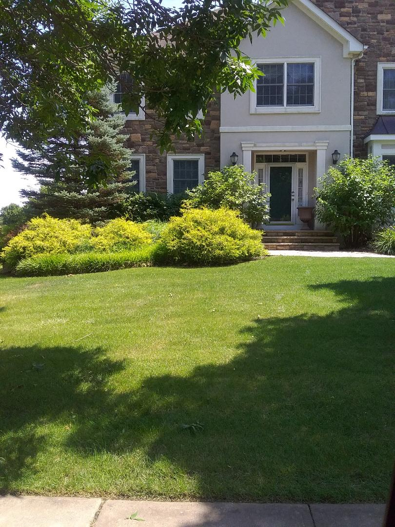 Chester, NJ - Heat makes the weeds pop, All Wet makes the weeds stop, all backed by our green lawn guarantee!!! =)