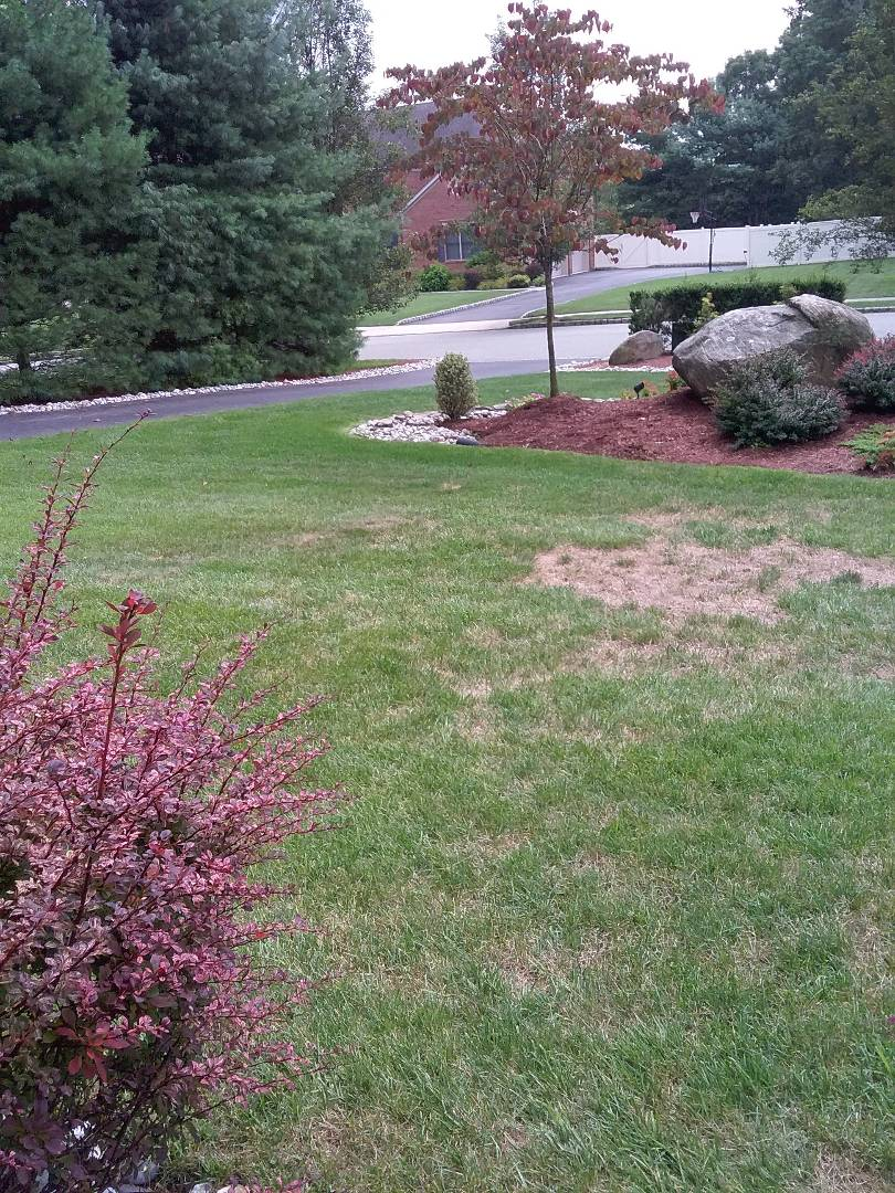 Mendham, NJ - Inspected tue irrigation and talked about are fertilization devison
