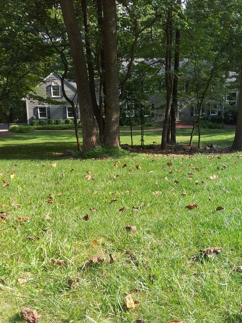 Randolph, NJ - Lawn care service for new customer. Applied fertilizer, insect and grubs control, and weed control!!! =)