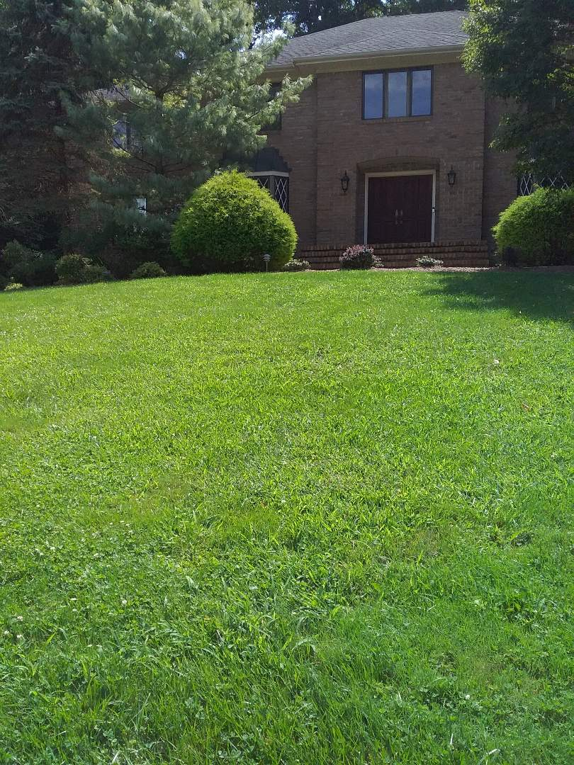 Wayne, NJ - Hot weather makes the weeds pop, All Wet makes them stop. Lawn care service proposal for new customer!!! =)