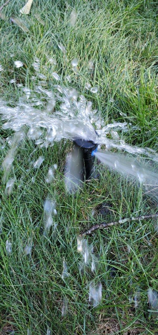 Repair sprinkler head hit by aeration