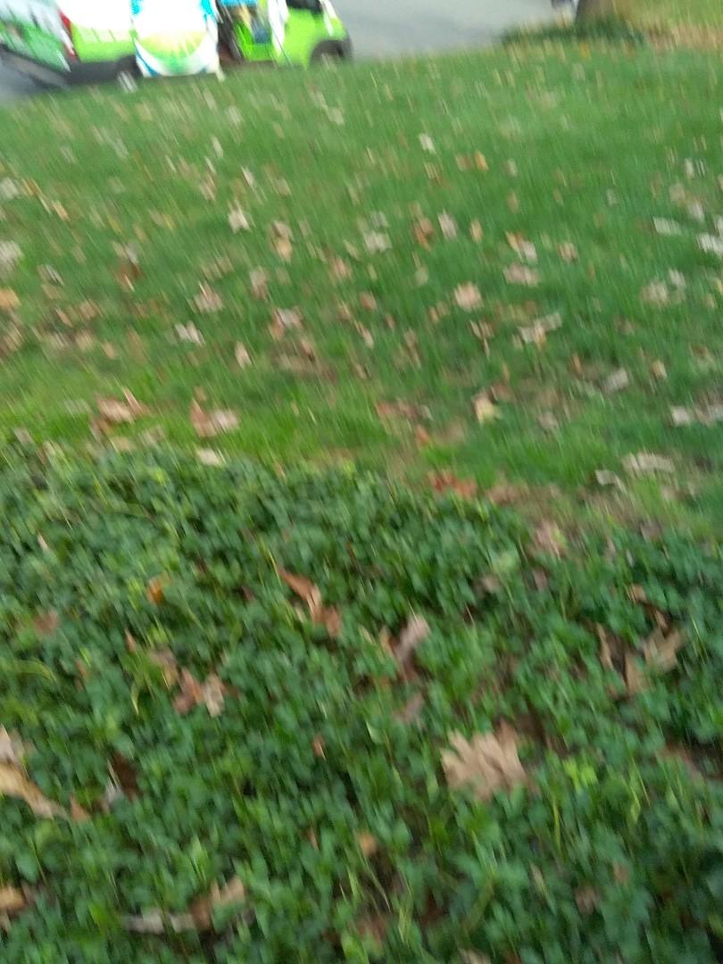 Chatham Township, NJ - Winterization and fertilization