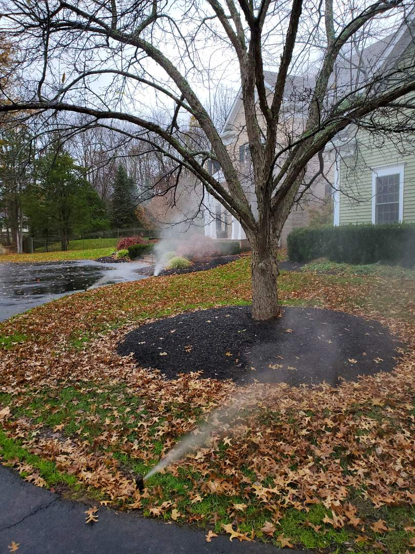 Winterize the irrigation system and back drain into basement