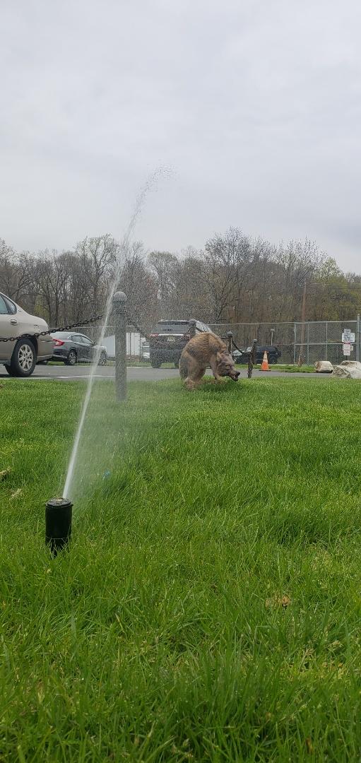 Start up irrigation system