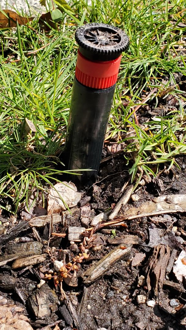 South Orange, NJ - Replace sprinkler head that was not retracting back in the ground