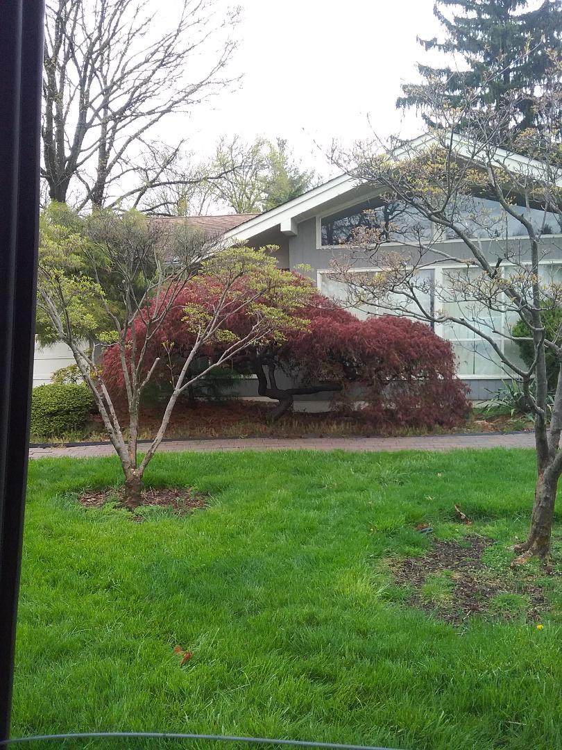 South Orange, NJ - Irrigation turn on