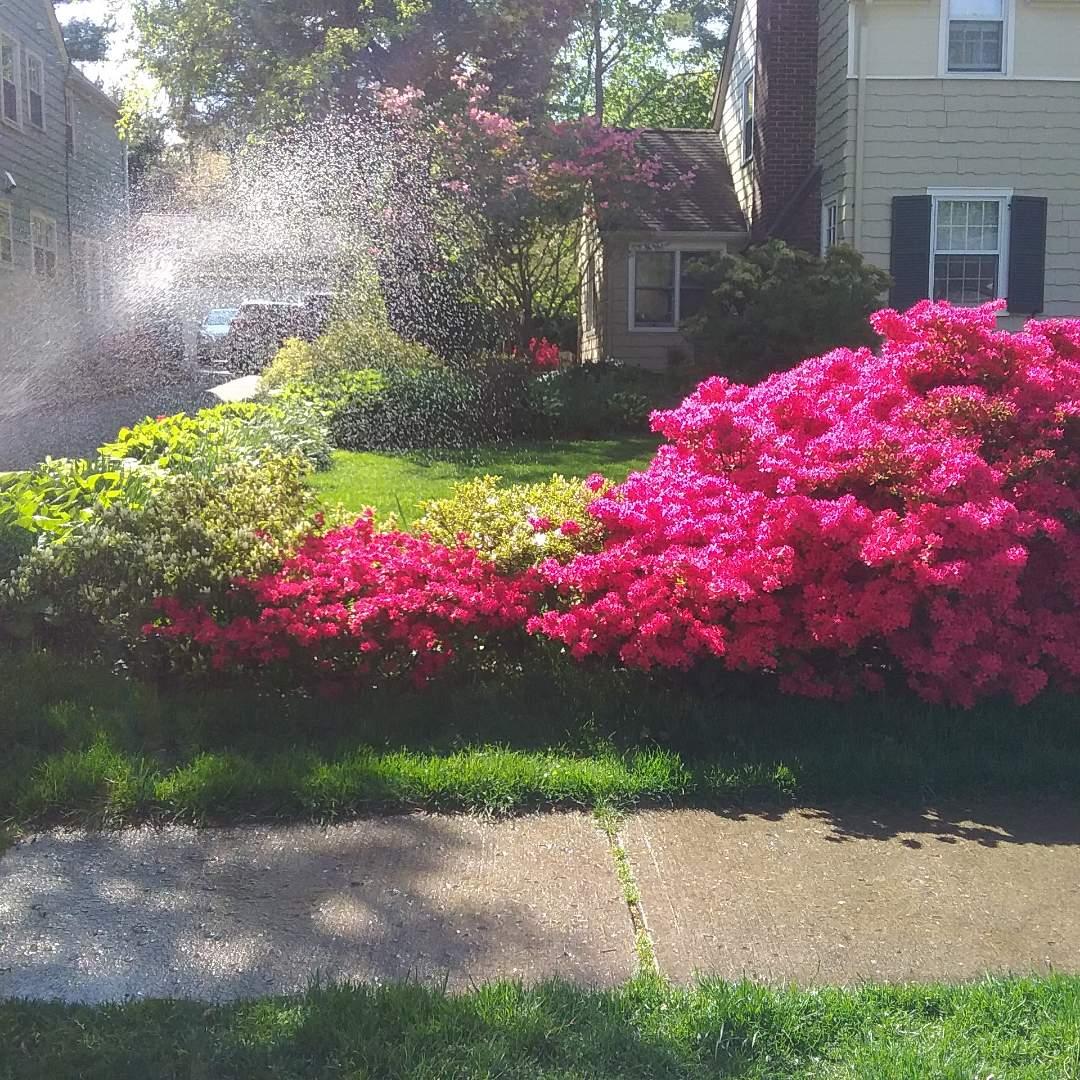 Start up sprinkler system