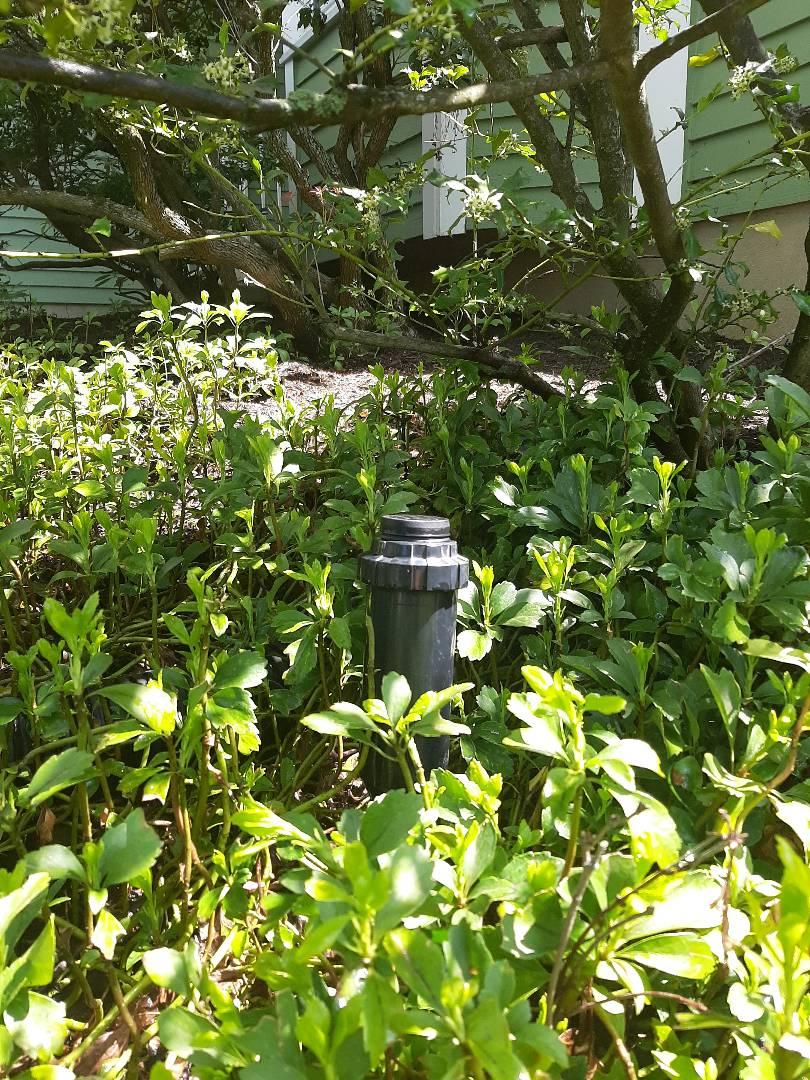 Spring start-up, irrigation sprinkler turn on. In Bedminster NJ