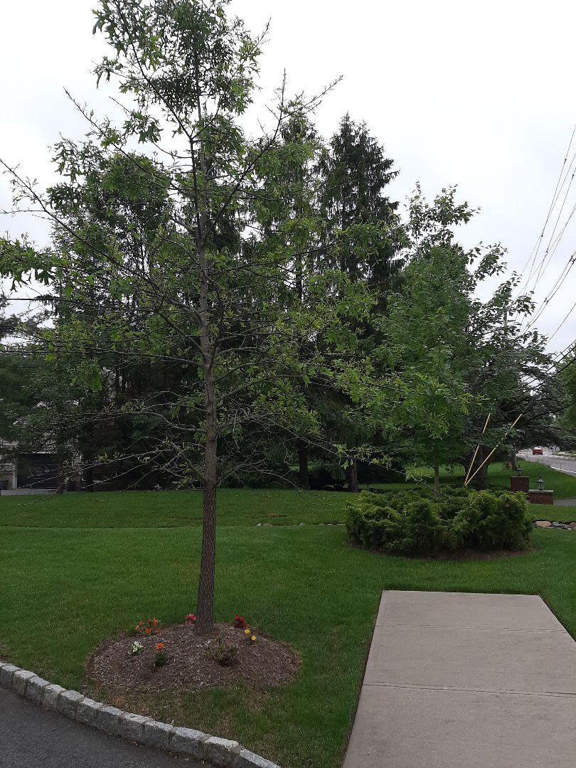 East Hanover, NJ - Spring start-up, irrigation sprinkler turn on. In East Hanover NJ