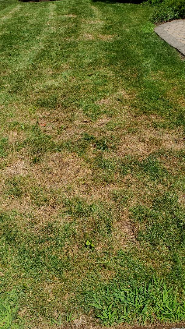 Talk to homeowner about Fertilization and grub control