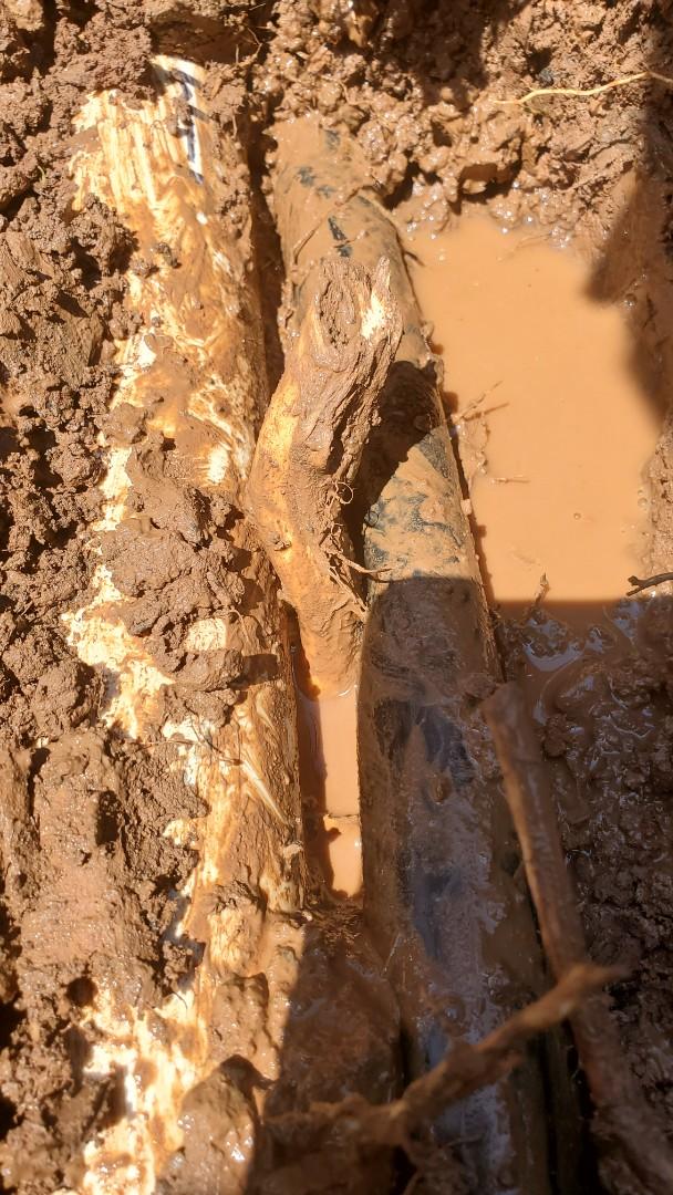 Repair sprinkler pipe broken from roots