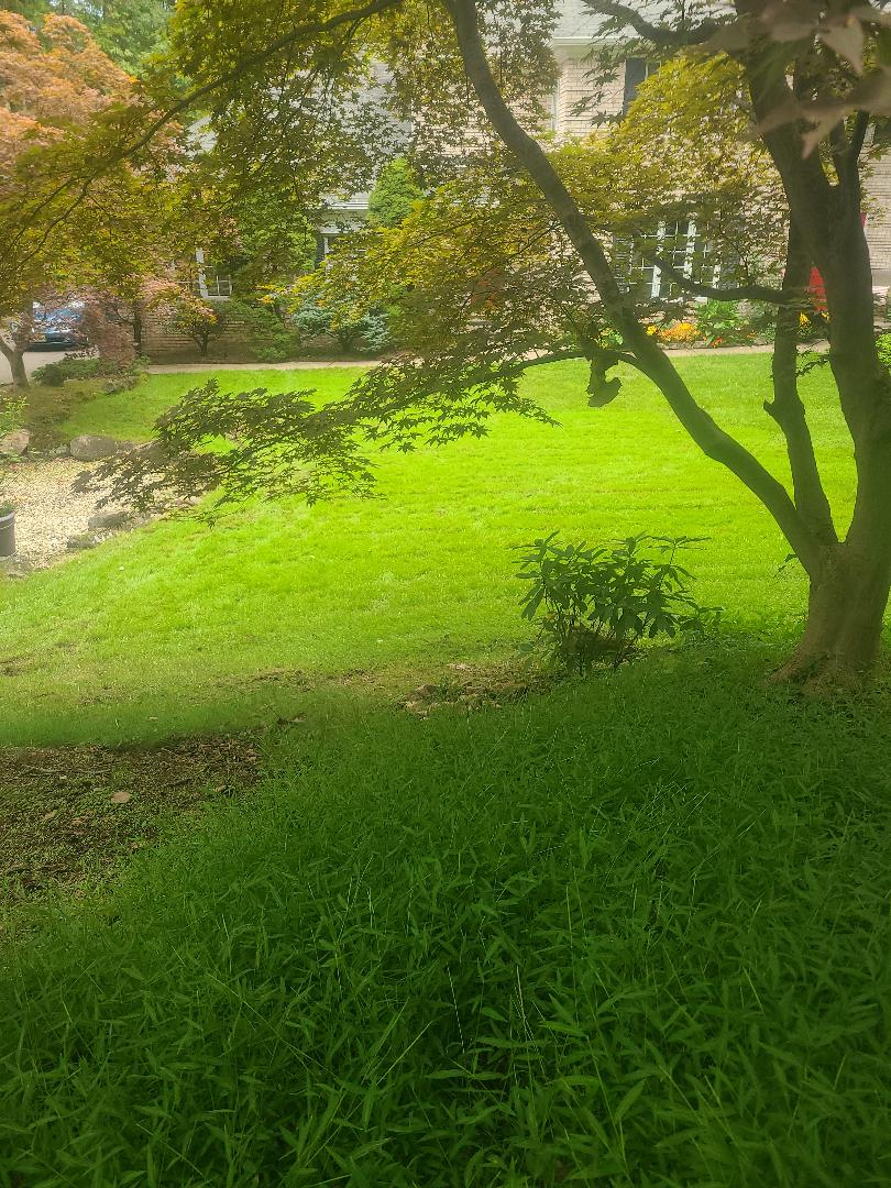 Areation and overseeding. Fall specials ask about lawn care bundles.