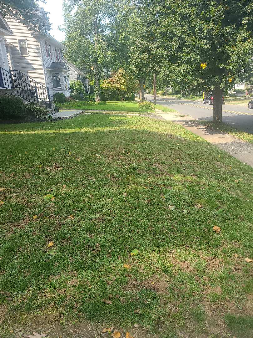 Areation and overseeding. Fall season lawn care.