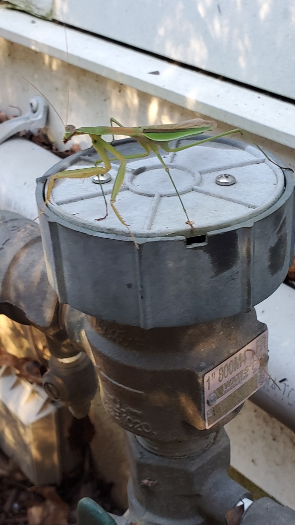 Blow out sprinkler system and have a guard for the backflow