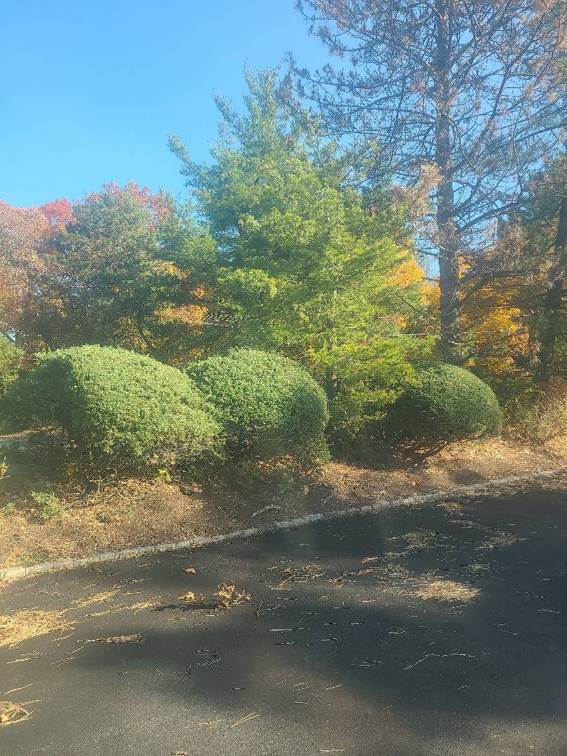 Roseland, NJ - Winterize sprinkler irritation system. Blow out. Drain out. Shut down.