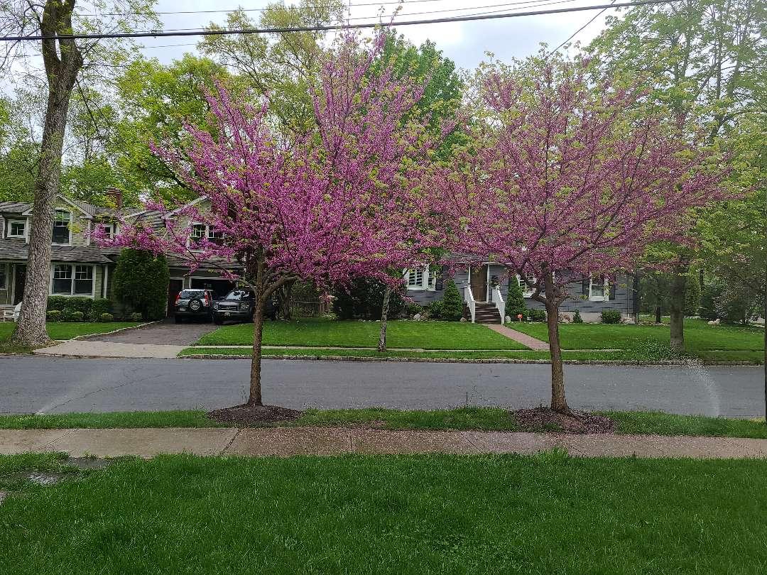 Spring start up, irrigation Sprinkler turn on. Repair broken heads, pipe breaks and leaks.