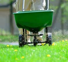 Lawn fertilization service to control weeds and crab grass