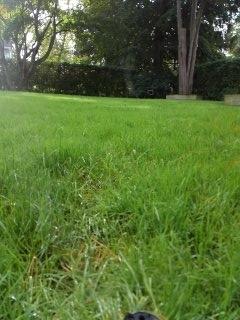 Mount Olive Township, NJ - 2 zone sprinkler system winterized