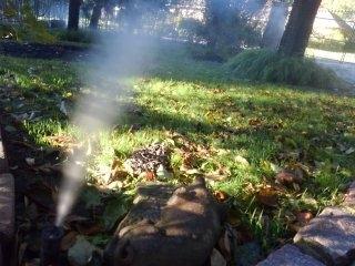 West Orange, NJ - Fall sprinkler blow out