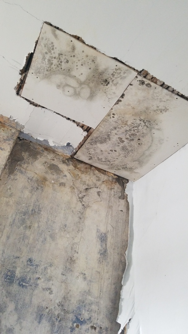 Arnold, MO - Mold removal and clean up