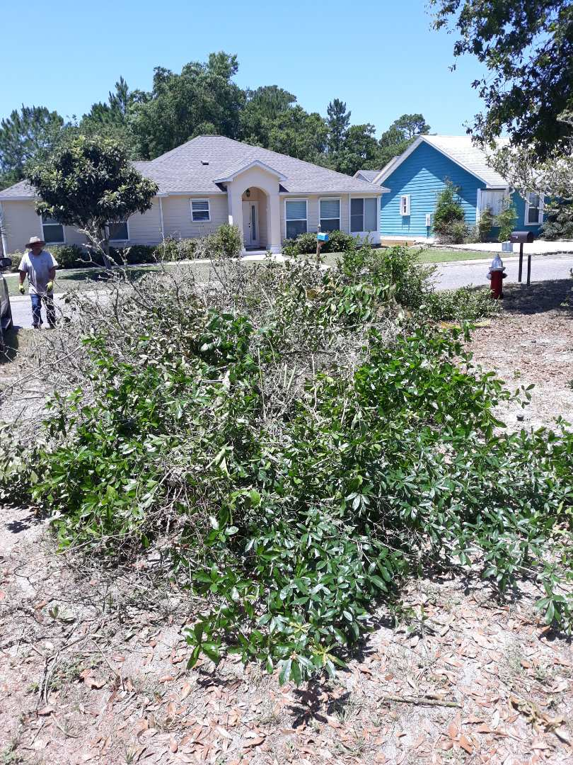 Remove tree limbs and debris out of a customer's yard