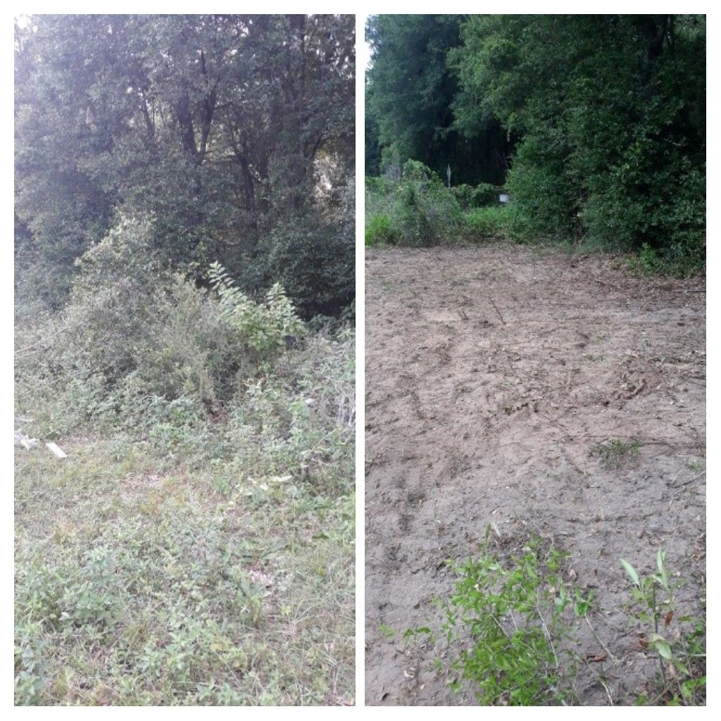 Did a tree debris remove and trash pickup