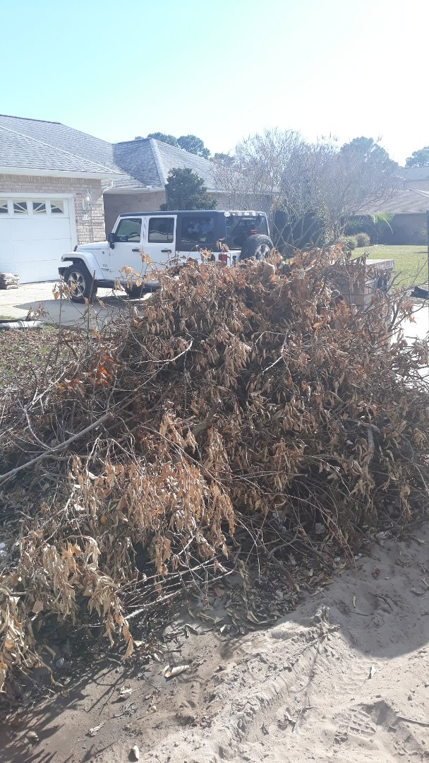 Remove tree leaves and branches from customer yard here in Gulf Breeze