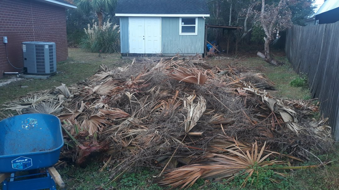 Hair remove old trees and palm trees and other the limbs at a customer's backyard today here in Gulf Breeze Florida