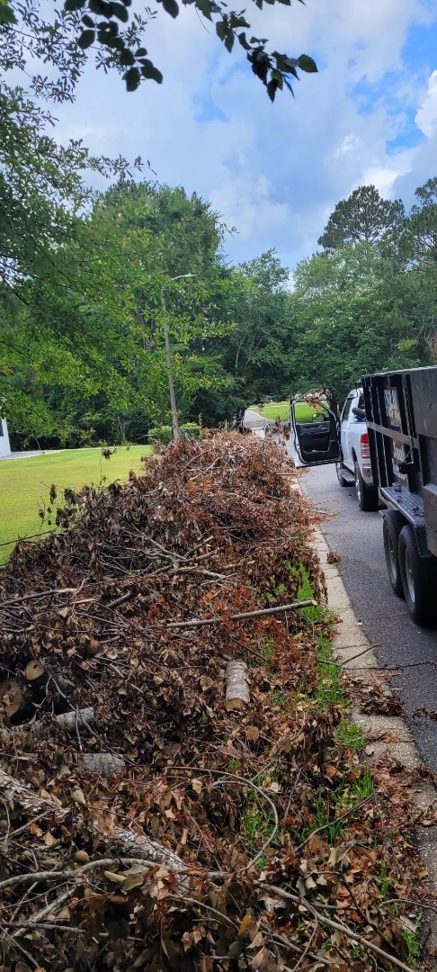 Tree trees and more trees limbs remove today in Pensacola
