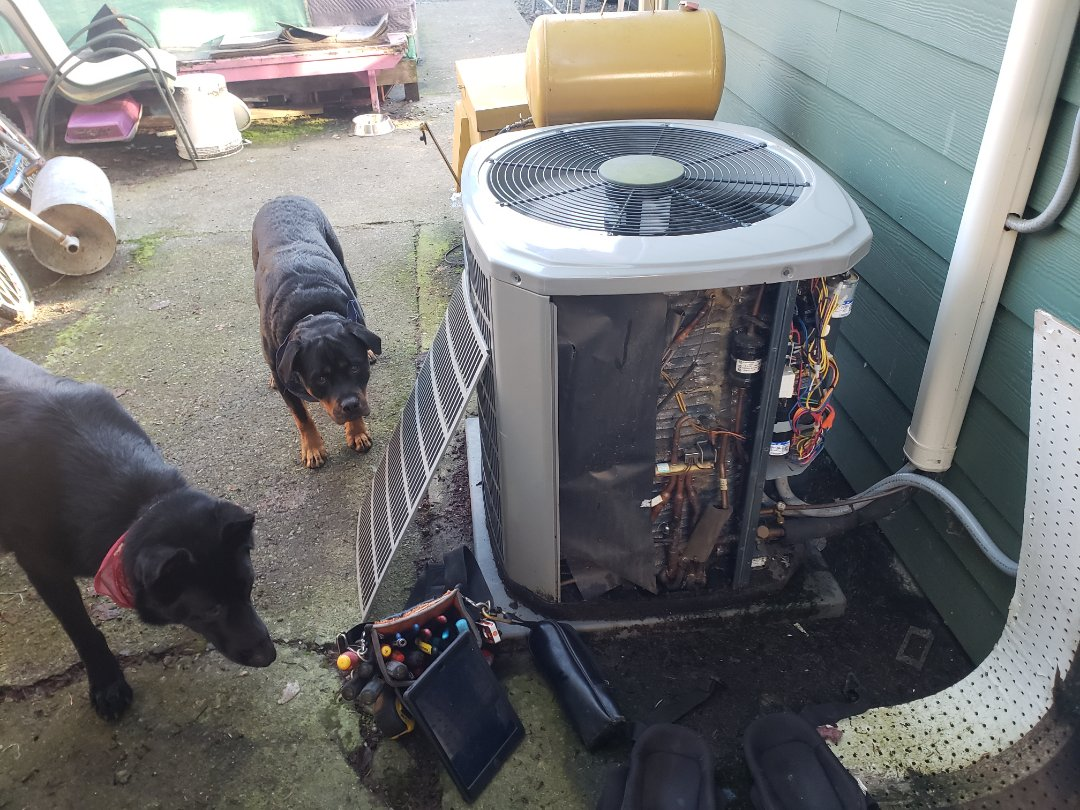 Duncan, BC - Getting some canine assistance while doing a seasonal maintenance on an American Standard heat pump in Sahtlam!