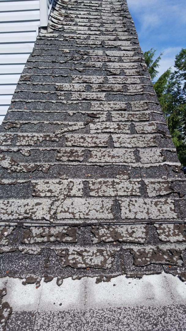 Dayton, OH - This is why organic shingles are no longer on the market.