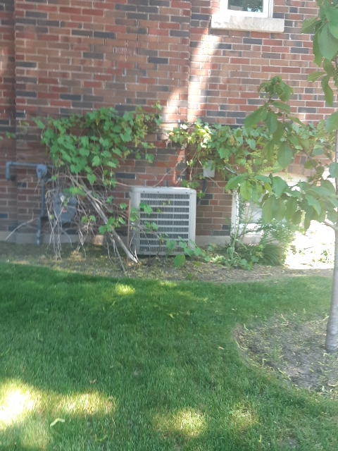 Ac matinace in Toronto on a goodman  unit Thorn bushes around the AC unit is not advised ouch lol