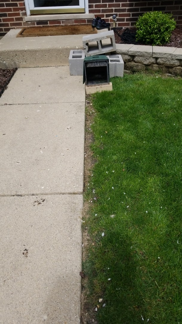 Palatine, IL - Professional skunk trapping and removal in Palatine , IL.
