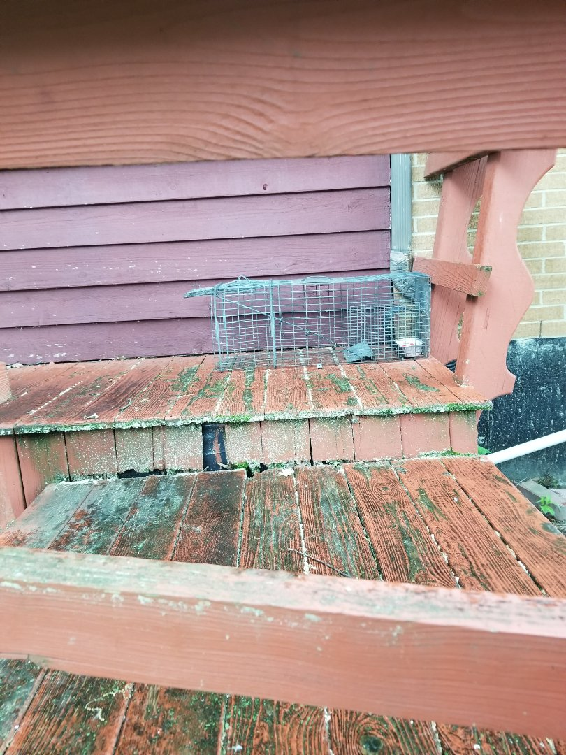 Lemont, IL - Professional raccoon trapping and removal in Palos Park , IL.