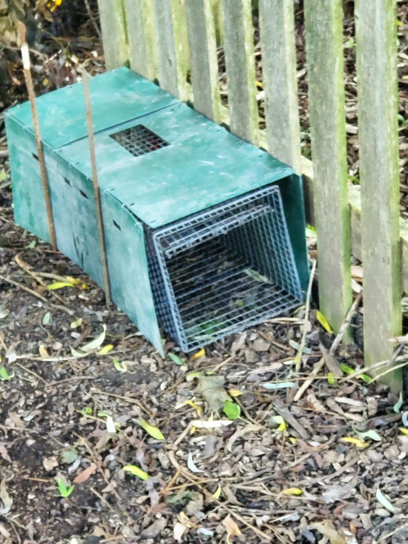 Professional skunk trapping and removal in Elburn , IL.