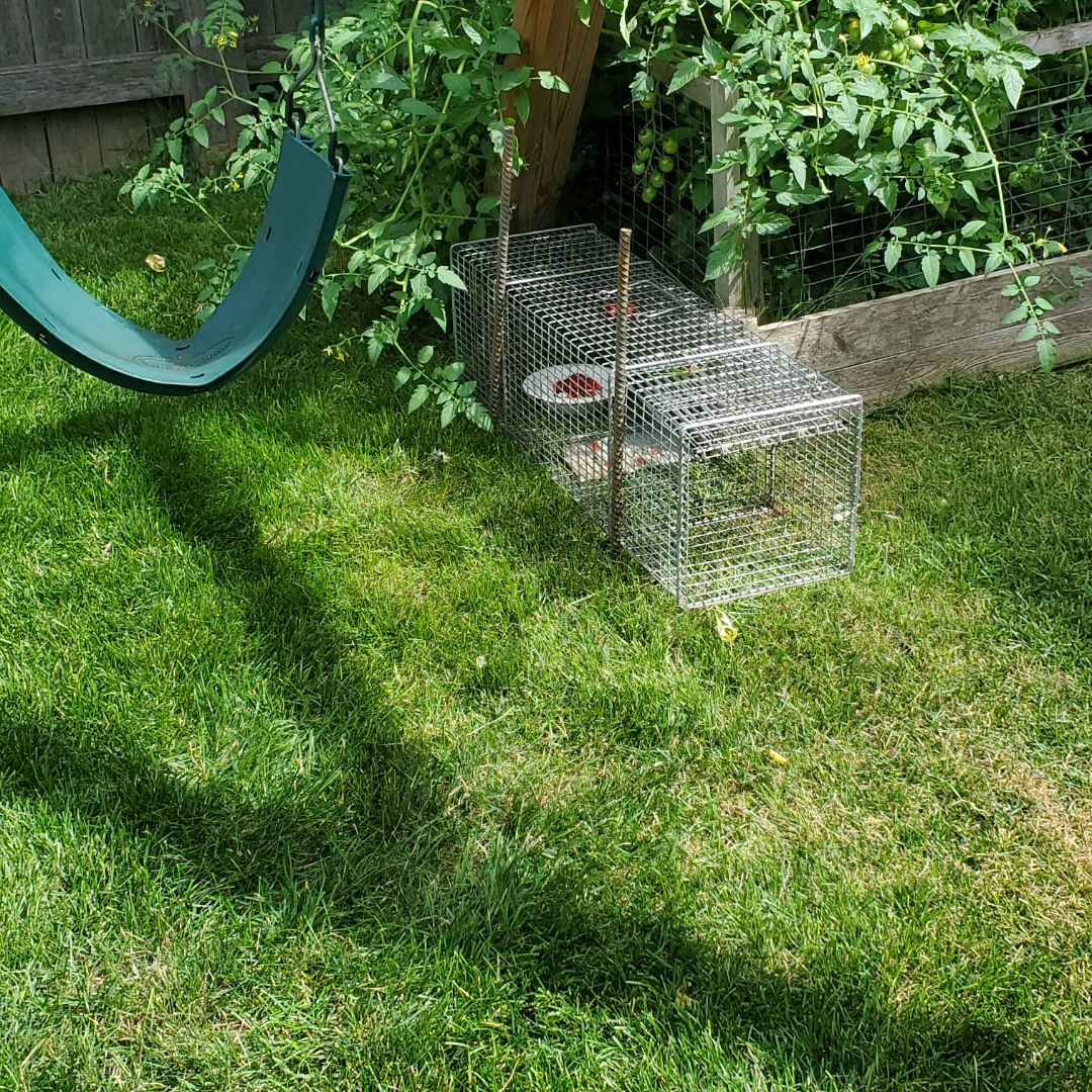 La Grange, IL - Professional nuisance wildlife trapping and removal in Lagrange , IL.