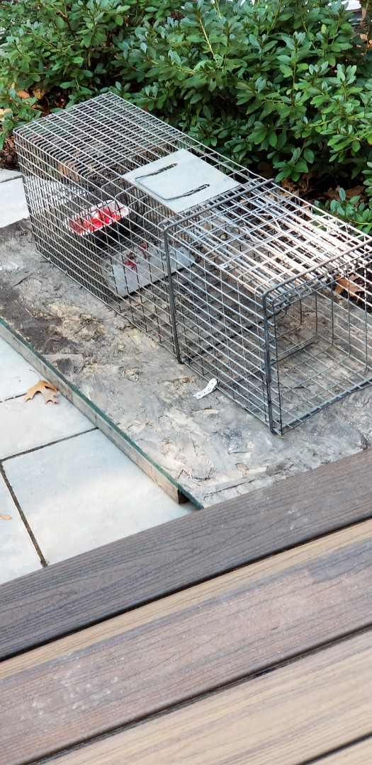 Lemont, IL - Humane Raccoon trapping and removal in Lemont , IL.