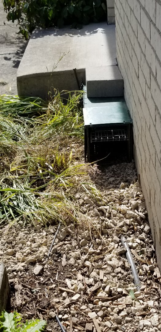 Downers Grove, IL - Skunk trapping and removal in Downers Grove , IL.