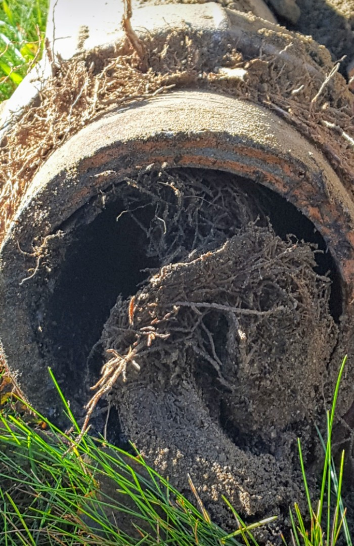 Cambridge, MA - Roots in main drain line
