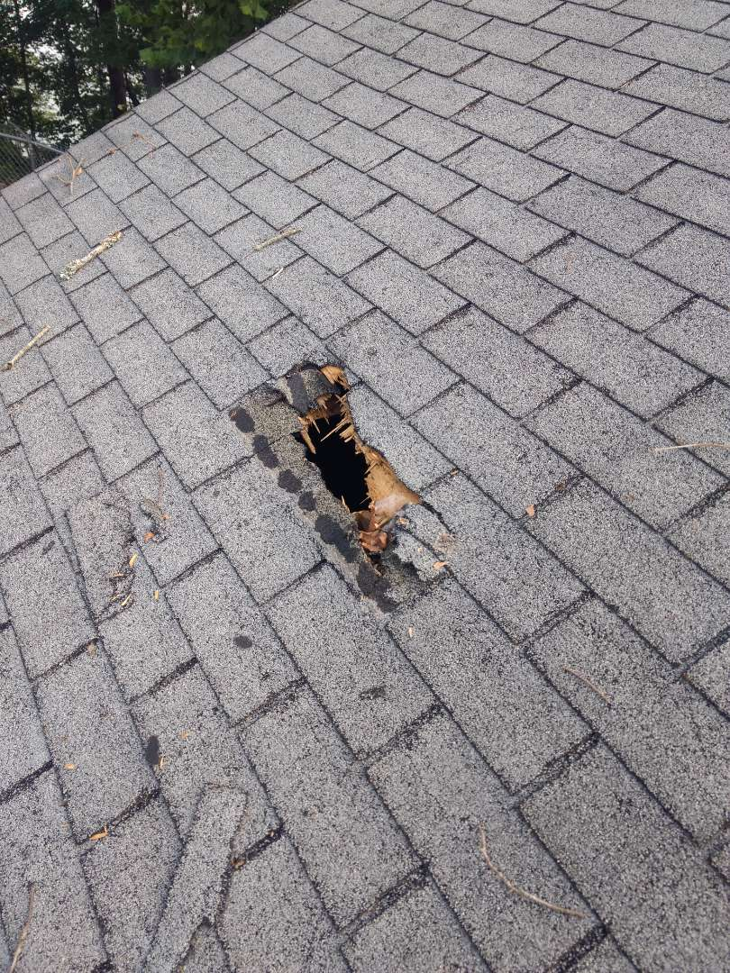 Kingsport, TN - We are drying in a hole caused by a falling tree and providing the home owner a free estimate for a complete roof replacement. We work with all insurance companies.