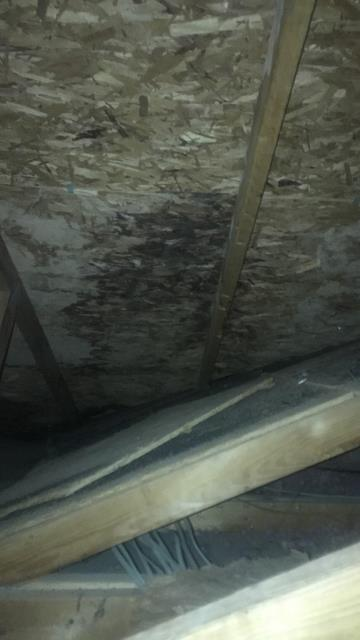 Roswell, GA - this homeowner is experiencing so problems with her roof and this is what we found in the attic. Do you have black mold?
