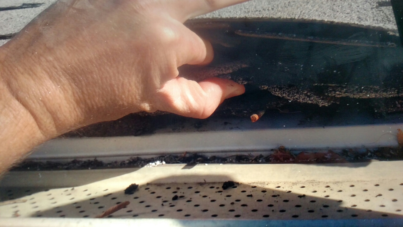 Roofing Contractor In Denver Co Homeguard Restoration