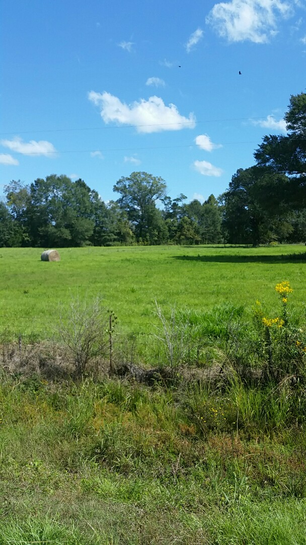 Surveyor Serving Ramer, AL | NRCS Easement Survey. 300 acre completed for client. Conservation has a nice plan for this property.