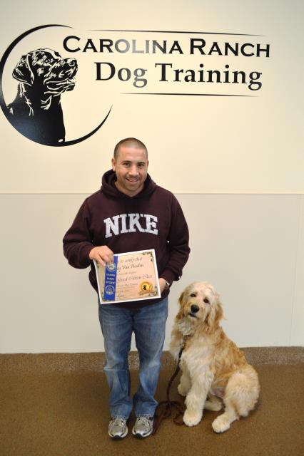 Fuquay Varina, NC - Bentley the big Goldendoodle is now a Canine Good Citizen and is on his way to big things.