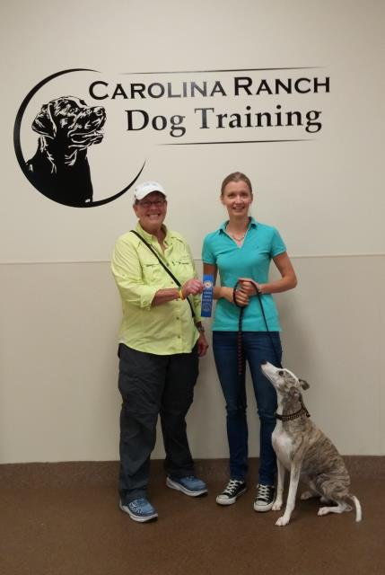 Raleigh, NC - Izak an accomplished Whippet passed the Canine Good Citizen test with flying colors. He has a great bond with his owner and did very well.