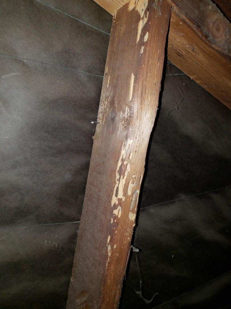 Whittier, CA - Termite Treatment