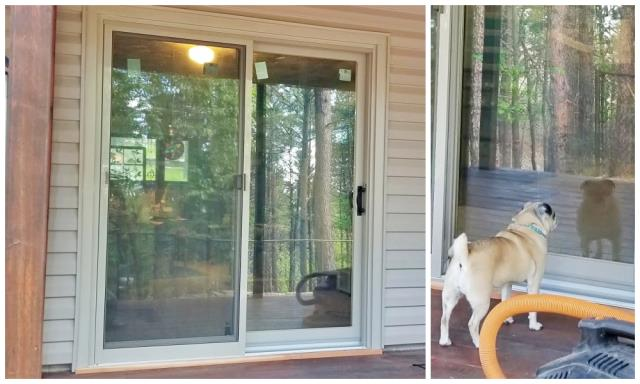 Black Hawk, SD - This Black Hawk home upgraded their patio door to a crystal clear Renewal by Andersen slider.  We think their pup approves, too!