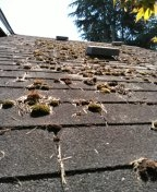 Tacoma, WA - .y customers 3-tab comp shingle has grown lots of moss under these trees like normal here on Western WA. Our new shingles with Scotchgard will extremely help with that.