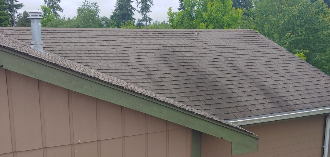 Lacey, WA - The Algae Resistent shingles from the Malarkey Rubber shigle line would prevent the Algae Streaks from growing on our customers roof. Great choice for our climate!